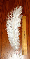 Ostrich Feathers White 17-19 Length 6-7 Wide Price Is Per Feather