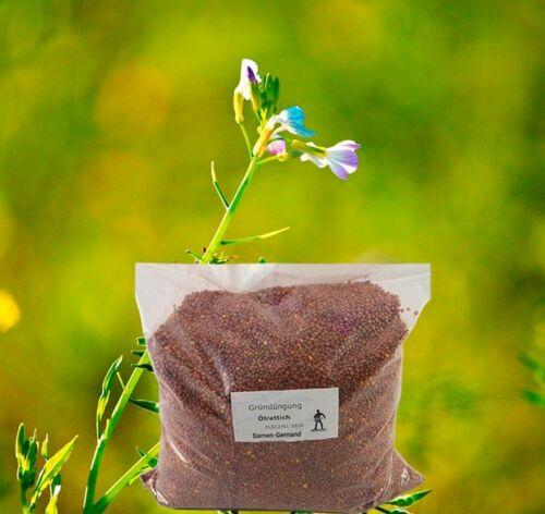 Ölrettich Gründüngung Samen 5 kg Frische Saat