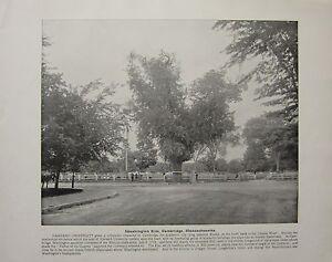 1898-PRINT-TEXT-WASHINGTON-ELM-CAMBRIDGE-MASSACHUSETTS