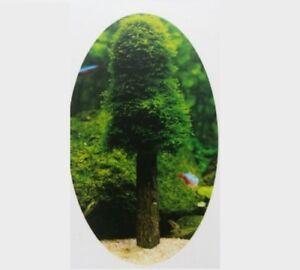 Moos-Baum-034-Christmas-tree-034-inkl-GRATIS-MOOS-Aquarium-Aquascaping-Moos