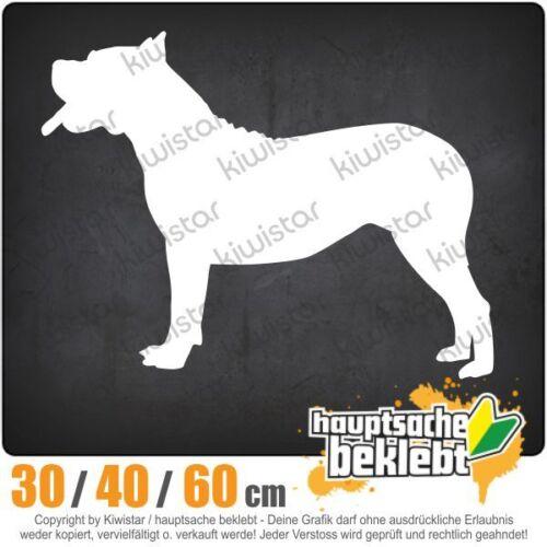 Dogo Canario Hundrasse chf0726  in 3 Größen JDM  Heckscheibe Aufkleber