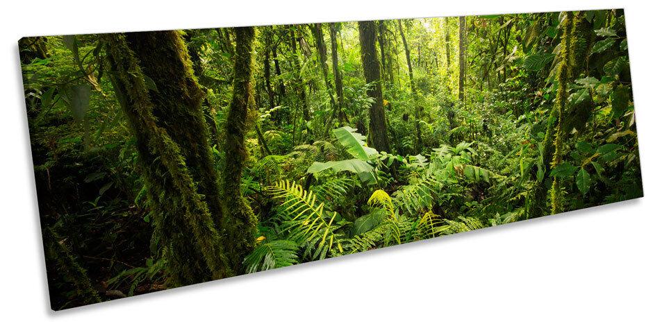 verde foresta paesaggio alberi a Muro ARTE POKO incorniciato stampa stampa stampa c7fcb0