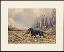 FLAT COATED RETRIEVER AT WORK GREAT DOG PRINT MOUNTED READY TO FRAME