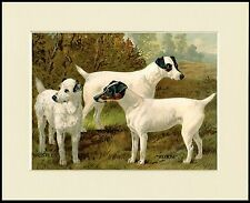 SMOOTH FOX JACK RUSSELL TERRIER NAMED DOGS DOG PRINT MOUNTED READY TO FRAME