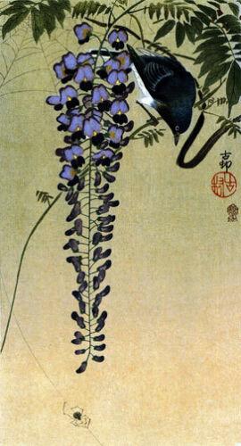 Flycatcher and Wisteria 22x30 Japanese Art Print Koson Asian art Japan