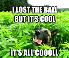 "3"" Funny Marijuana sticker / decal. HAPPY STONED DOG 420 Glass Bong Pot Pipe THC"