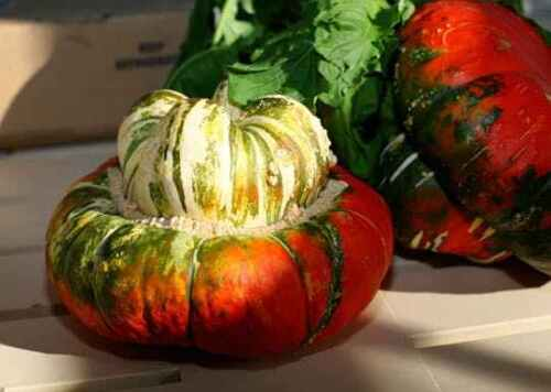 Turk/'s Turban Winter Squash 10 Seeds Turks Cap Heirloom Ornamental Gourd Edible