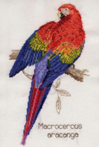 Rouge /& jaune macaw parrot Compté Cross Stitch Kit ou graphique Aida