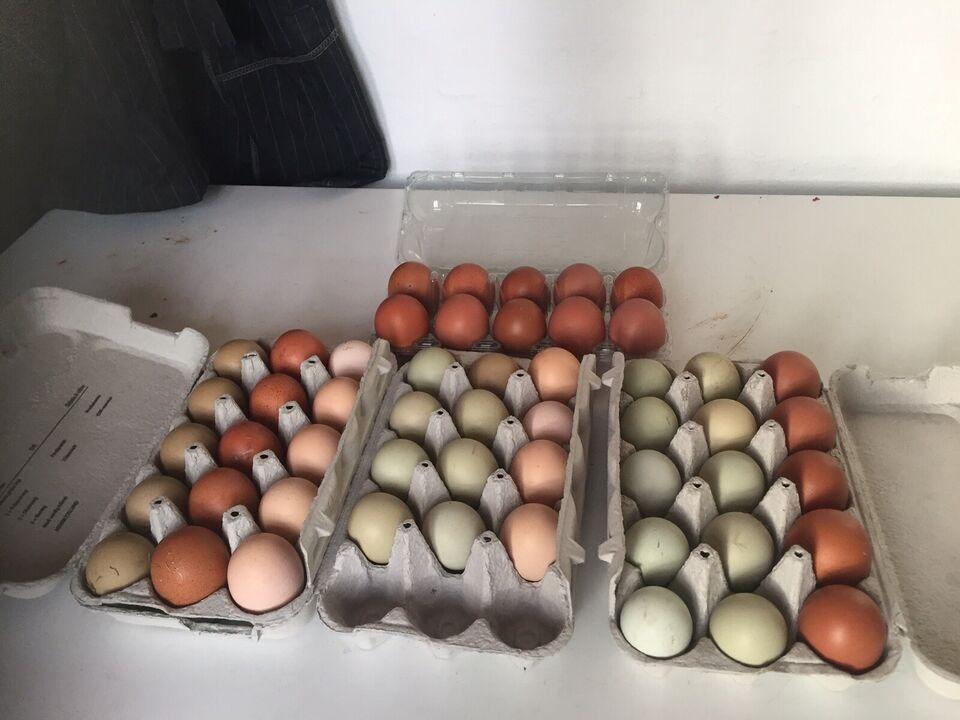Æg, 30 stk.