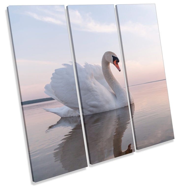 Beautiful Weiß Swan CANVAS WALL ART TREBLE Square Print Picture