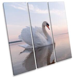 Beautiful-White-Swan-CANVAS-WALL-ART-TREBLE-Square-Print-Picture