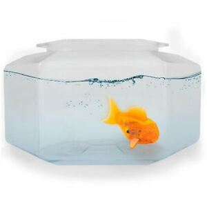 robo fish bowl with clownfish