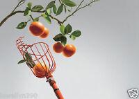 NEW! Fresh Fruit Picker Basket Orange Peach Plum Apple