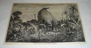 1878-Revista-Grabado-Caseta-de-Mango-Jefe-Nuevo-Caledonia