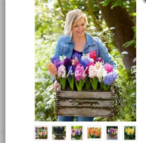 MIX-100-seeds-colorful-Hyacinth-Bonsai-perennial-Hyacinth-potted-plant-houseplan