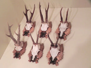 Charitable 6 Rehgweihe Deer Antlers Gift Idea Wall Decoration #21.187 Other Antique Decorative Arts