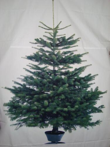 220x150 nuevo Home Kontor tannenbaum sustancia árbol vinter ikea Navidad decoración aprox