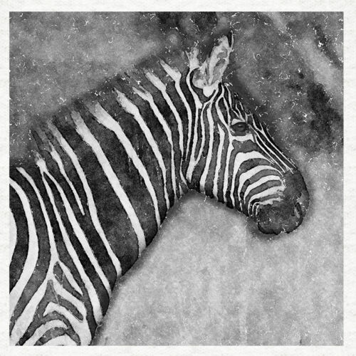 Fabric Cushion Craft Quilting Panel black and white watercolour print Zebra