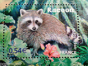 France, 2007, Timbre 4034, Animaux, Racoon, Animals, Neuf** Mnh Stamp DernièRe Technologie