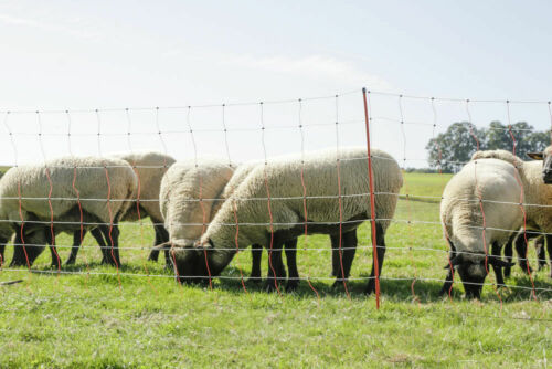 Schafnetz Ziegennetz Hütenetz Elektrozaun Weidenetz Weidezaun Zaun Topline Net
