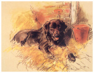 LABRADOR RETRIEVER RETRIEVING AT SOUTH WALES GUNDOG FIELD TRIALS OLD DOG PRINT