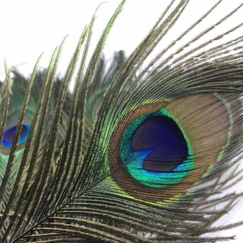 10stk Natürliche Peacock Tail Eye Feder Fliegenfischen gebunden Streamer