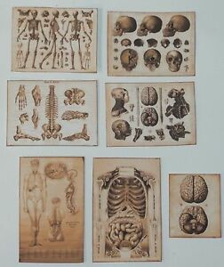 Dollhouse miniature handcrafted Antique medical posters 1//12th scale