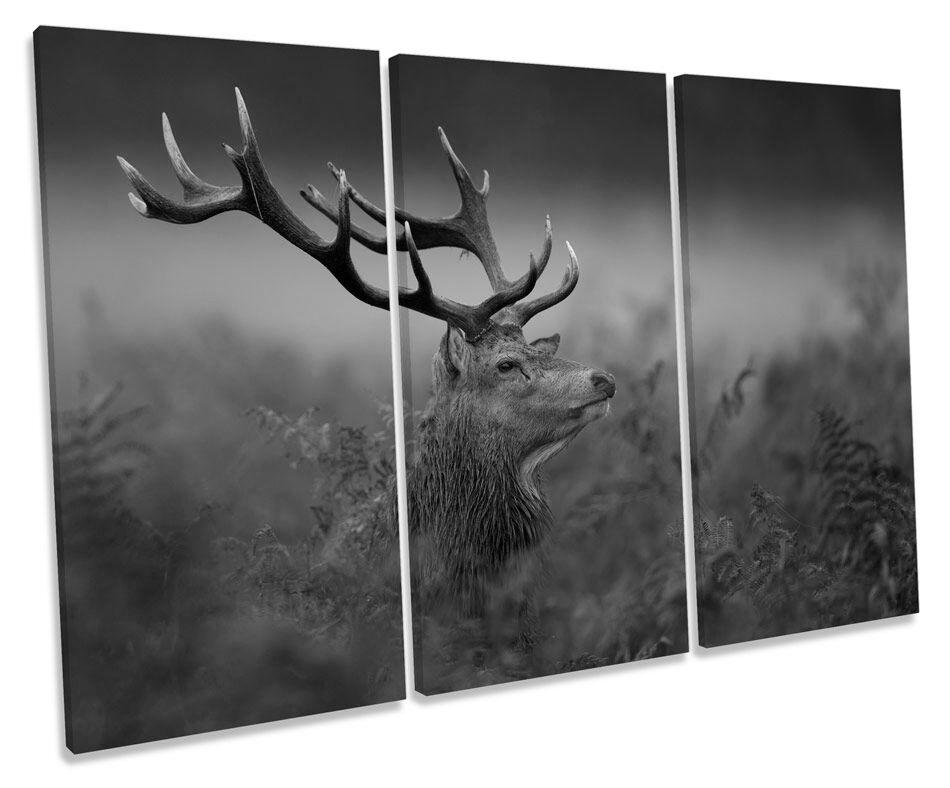 Wild Stag Deer B&W CANVAS WALL ART TRIPLE Box Frame Print