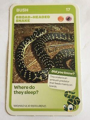 Taronga Zoo Woolworths Aussie Animal Card #99 Tiger Snake
