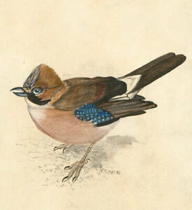 N-Prince-A-Pair-Of-Signed-Mid-20th-Century-Watercolour-Studies-of-Birds