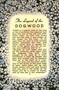 The-LEGEND-Of-The-DOGWOOD-White-Flowers-c1940-039-s-Linen-Postcard
