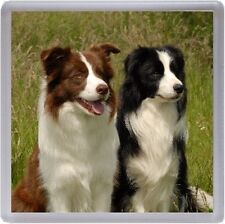 Border Collie Dog Coaster No 6 by Starprint