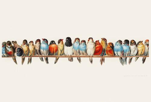 1900 Perch of Birds Bird Illustration Poster