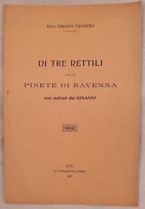 FAUSTO-FAGGIOLI-DI-TRE-RETTILI-DELLE-PINETE-DI-RAVENNA-GINANNI-EMILIA-ROMAGNA