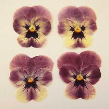 24 PERFECT PRESSED PANSY FLOWERS - RASPBERRY SORBET - SMALL PANSIES - VIOLAS