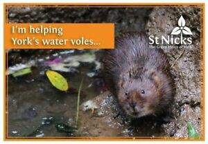 Charity-gift-card-help-York-039-s-water-voles