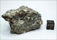 Amazing looking Lunar Meteorite NWA 11273 - 62 grams - Own a Piece of the Moon