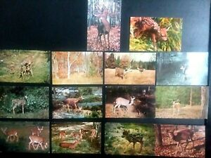Vintage-Post-Cards-Lot-of-15-ranging-from-c-1950-039-s-to-1970-039-s-Wild-Life-Deer-M