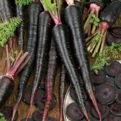 100 Carrot Seeds Black Nebula 2020 Seeds     $1.69 Max Shipping