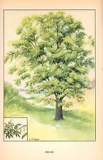 """1926 Vintage TREES """"PECAN"""" GORGEOUS COLOR Art Print Lithograph"""