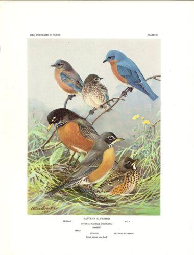 "THRUSHES/"" BROOKS GORGEOUS Lithograph 59 1960 Vintage /""ROBIN EASTERN BLUEBIRD"