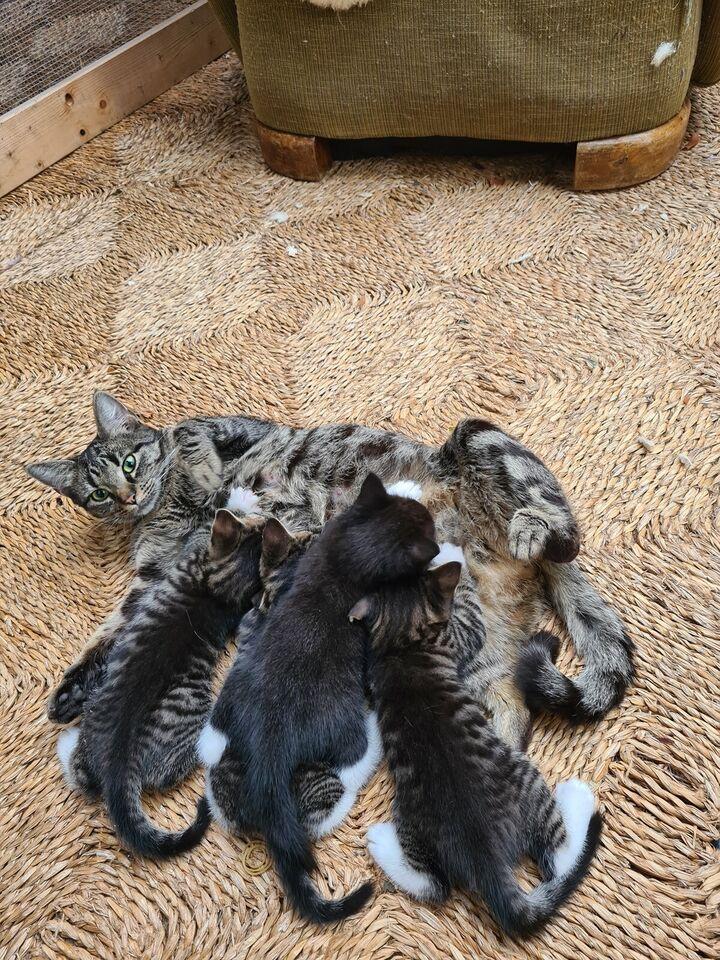 Flere killinger, Huskat, 12 uger