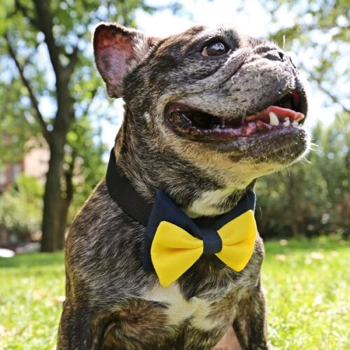 Yellow and Blue Bow Tie for Dogs UOH FREE SHIPPING