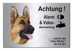 Hunde Haben Sie Einen Fragenden Verstand Schäferhund-hund-alarm-video-30 X 20 Cm Alu-edelstahl-optik-schild-warnschild GüNstigster Preis Von Unserer Website