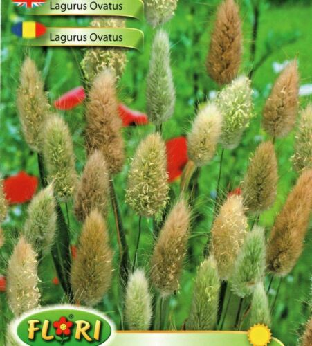 BUNNY/'S TAIL 900 HIGH QUALITY SEEDS //1358 LAGURUS OVATUS ORNAMENTAL GRASS