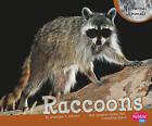 Raccoons by J Angelique Johnson (Hardback, 2010)