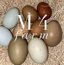 Easter Egger Hatching Eggs