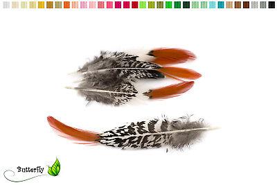 10 Fasanenflügelfedern 10-14cm Fasanenfedern Indianer Federn Fasan Basteln Deko