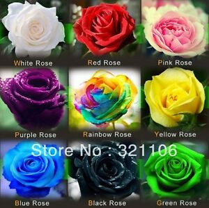 Rose-seed-9-Color-Colorful-Seeds-Rainbow-Rose-Seed-Home-Garden-Flower-For-LOVE