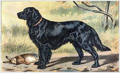 Le Retriever A Mauvais Plat Cane Da Caccia Familienhund Mahler 31 Fac-simile To Enjoy High Reputation In The International Market Arte E Antiquariato